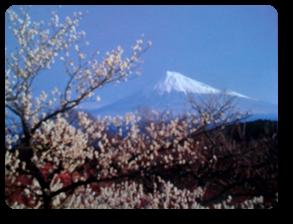 Vign_photo_fuji